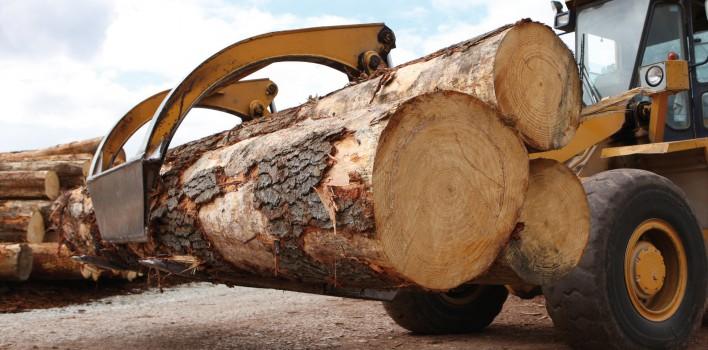 TRANSIMEX étend ses activités à la filière bois